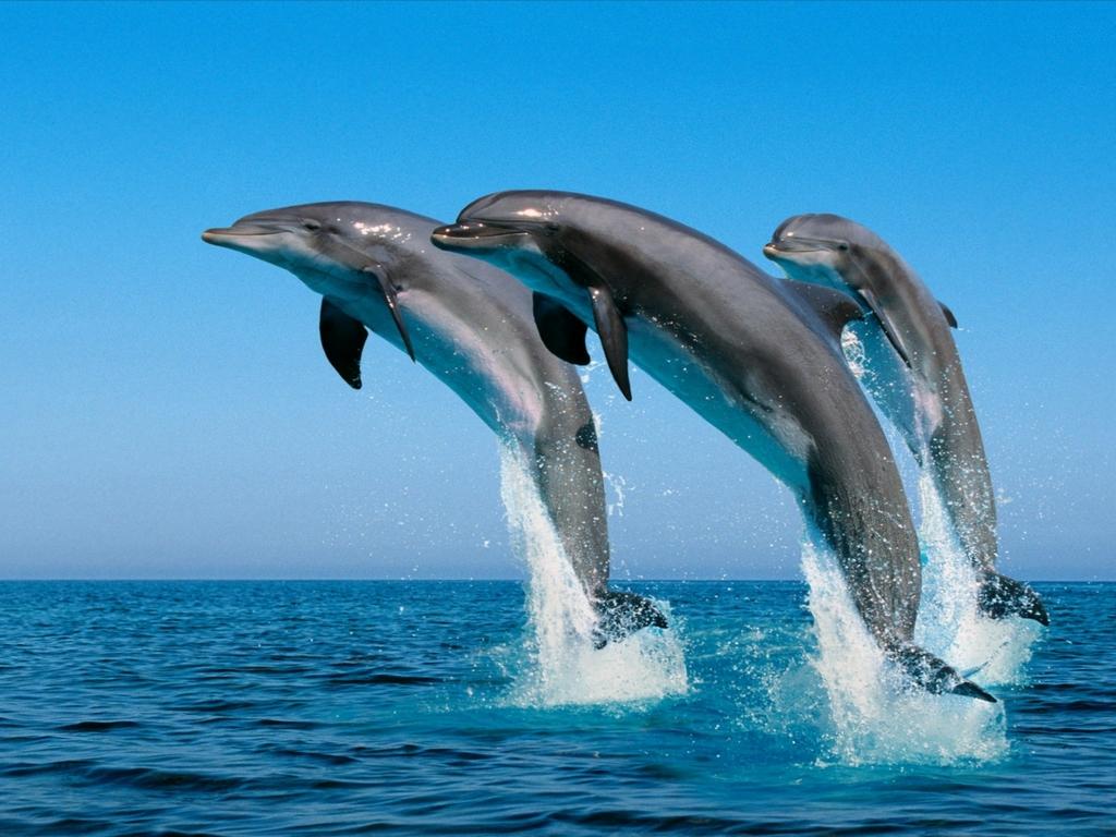 DelfinesLibres