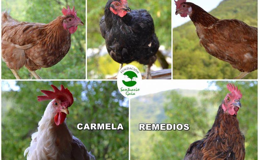 Carmela, remedios, ursula, clotilde, Sirena